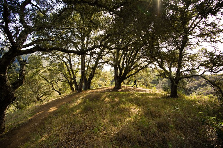 The Best Day Hikes Within 150 Miles Of San Francisco On